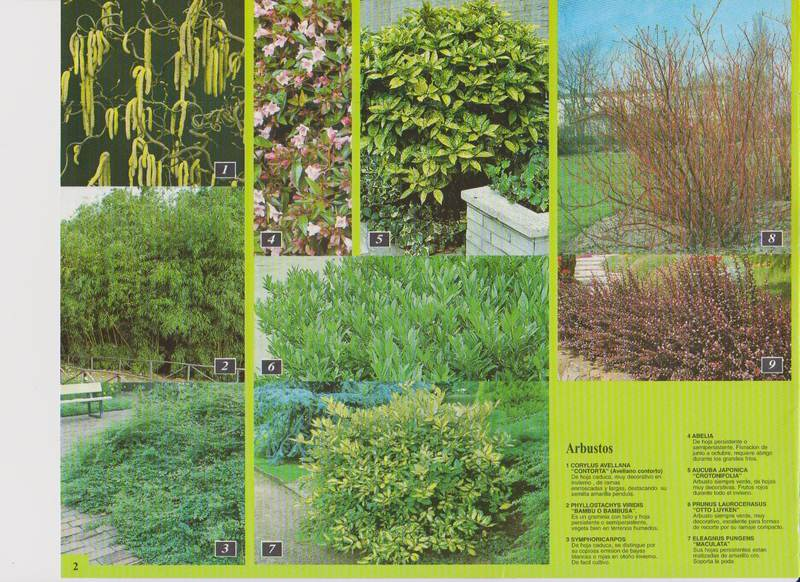 Catalogo for Arbustos jardineria