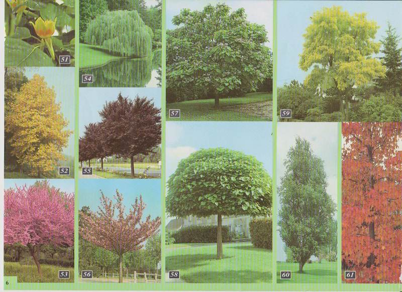 Catalogo for Arbustos enanos para jardin